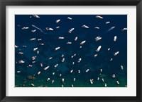 Framed Boat Conference - Amalfi Coast