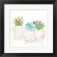 Framed Sweet Succulent Pots IV