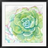 Framed Sweet Succulents IV