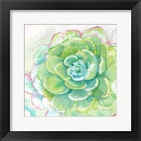 Framed Sweet Succulents IV