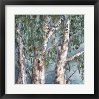 Framed Eucalyptus Trees