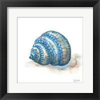 Framed Bohemian Shells I