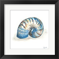 Framed Bohemian Shells IV