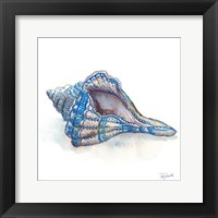 Framed Bohemian Shells V