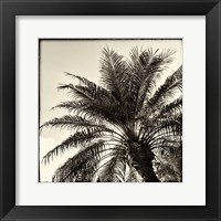 Framed Palm Tree Sepia I