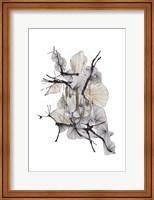 Framed Komorebi