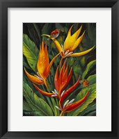 Framed Heliconia Augusta