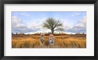 Framed Wild Cats