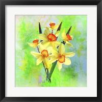 Framed Daffodil Flowers