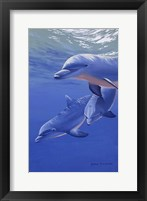 Framed Dolphin Smile