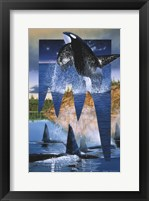 Framed Orca Reflections