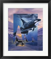 Framed Orca Song