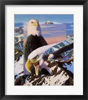 Framed Screaming Eagles