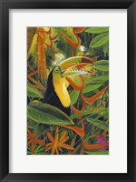 Framed Toucan Colors