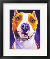 Framed Pit Bull - Rexy
