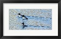 Framed Alaskan Ducks