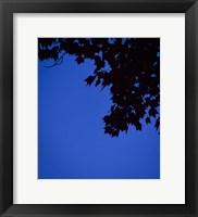 Framed Blue Maple Silhouette