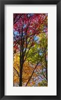 Framed Color Blend
