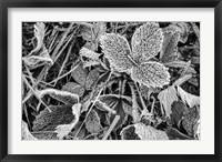 Framed Fine Frost
