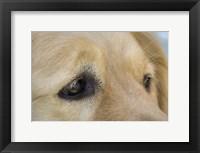 Framed Irresistable Eyes