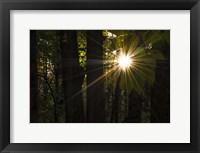 Framed Leaf Peeping Sun