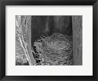 Framed Robin's Nest