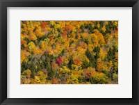 Framed Vermont's Glory