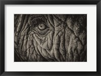 Framed Elephant Close Up II Sepia