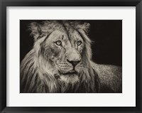 Framed Lion Sepia