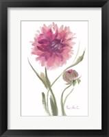 Framed Flower Series 6