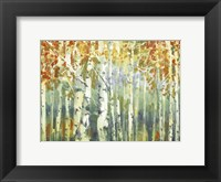 Framed Abstract Birch Trees Warm