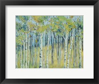 Framed Birch Forest