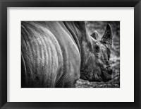 Framed Rhino II - Black & White