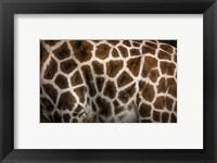 Framed Giraffe