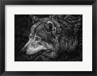 Framed Lone Wolf - Black & White