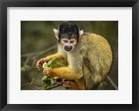 Framed Cute Monkey