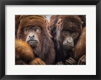 Framed Oranje Monkeys