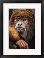 Framed Oranje Monkey