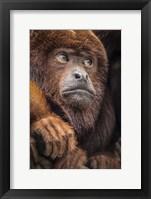 Framed Oranje Monkey II