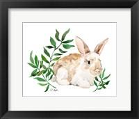 Framed Tan Bunny Rabbit
