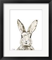 Framed Grey Bunny