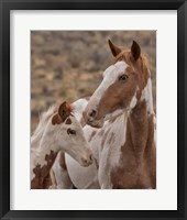 Framed Gypsy & Sentinel - S Steens Wild Mustangs