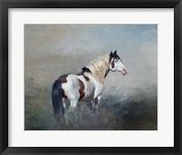 Framed Shaman - S Steens Wild Stallion