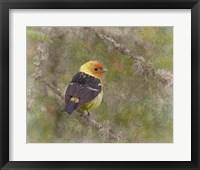 Framed Western Tanager