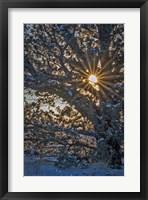 Framed New Years Steens Mountain Sunrise
