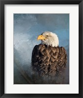 Framed Bald Eagle