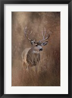 Framed Muley - Malheur