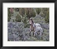 Framed Palomino Mare & Colt