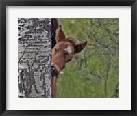 Framed Ochoco Foal - Ochoco