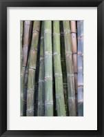 Framed Bamboo Fence